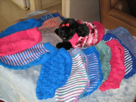 Knitting Patterns For Dog Coats Australia | sherzam toy standard poodles