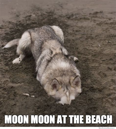 Moon Moon Meme - moon moon wolf funny moon moon sen hot pic monsters