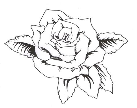rose tattoo template tattoovorlage clipart best