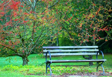 picture of a park bench view from a park bench january 2013