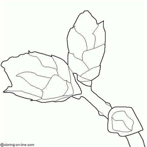 coloring page flower bud tree buds coloring pages