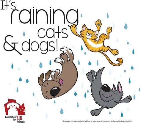 it s raining cats and dogs it s raining cats and dogs wrap up