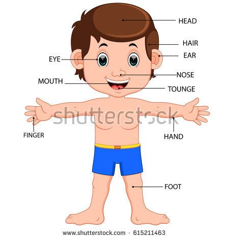 file diagram showing the parts of the body the lymphatic body parts stock images royalty free images vectors