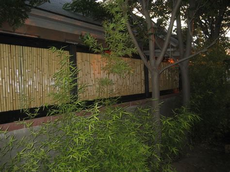 bamboo fencing tropical san diego by backyard x