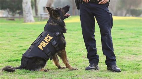 cop dogs new illinois keeps dogs with partner officers chicago tonight wttw