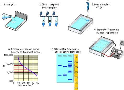 lab bench electrophoresis dna electrophoresis lab www pixshark com images