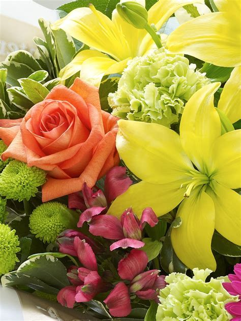 International Florist by Flowers International Driverlayer Search Engine