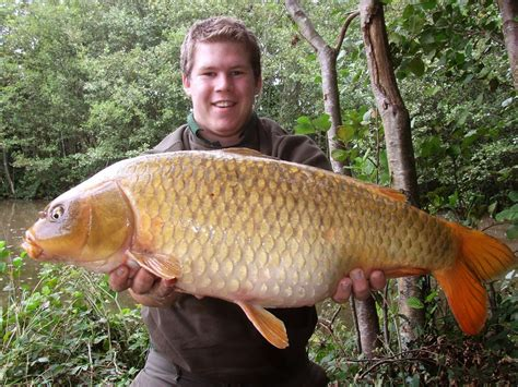 foto ikan mas terbesar  dunia