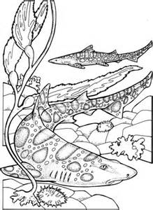 basking shark coloring page pin basking shark coloring page pictures on pinterest