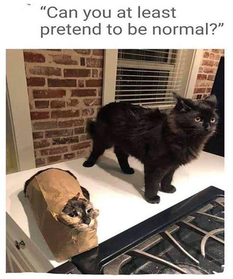 animal memes    memes   care