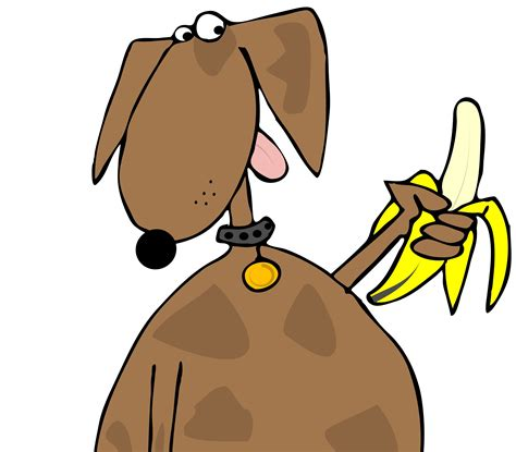 banana for dogs can dogs eat bananas healthydogs4life