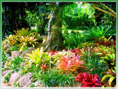 Cairns Botanical Garden Panoramio Photo Of Cairns Botanical Gardens