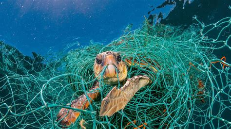 National Geographic Bag W for animals plastic is turning the into a minefield