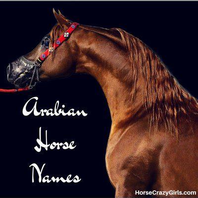 themes for names of horses arabian horse names