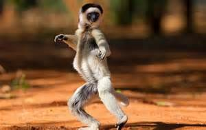 animals dancing images daily updated funny animals pictures