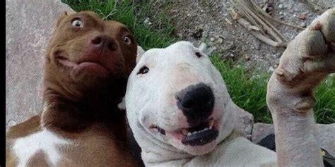 Tongsis Hari Ini gaul abis anjing ini doyan selfie pakai tongsis plus