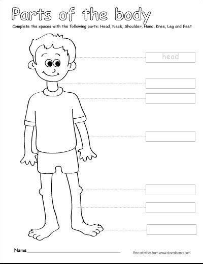 printable label body parts label the parts of the human body free worksheets for