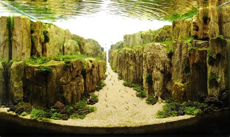 aquascapes com the incredible underwater art of competitive aquascaping colossal