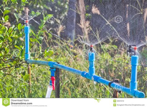 garden irrigation stock photo image of healthy