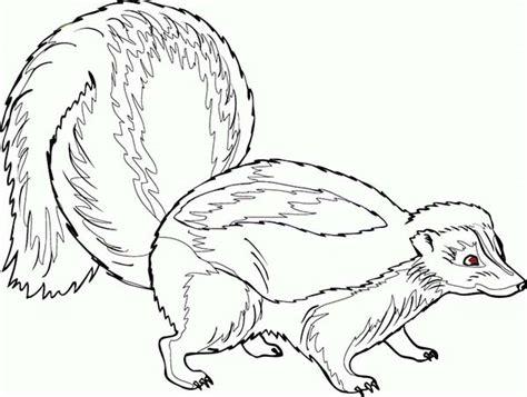pregnant skunk coloring page color luna