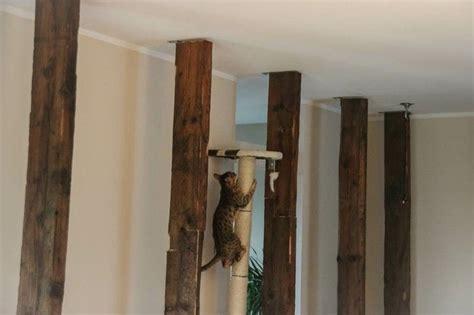 Kratzbaum Selber Bauen Kosten 1248 by Die Besten 25 Kratzbaum Selber Bauen Ideen Auf