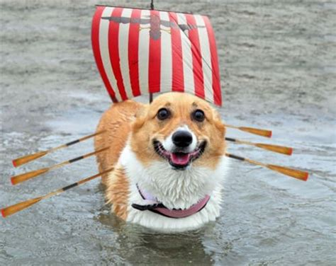 dog and boat puns viking dog this would be a great place for a thorgi pun