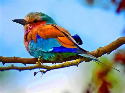 colorful birds colorful bird photography colorful birds photo 4 birds