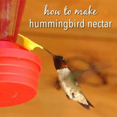 how to make hummingbird nectar hummingbirds water