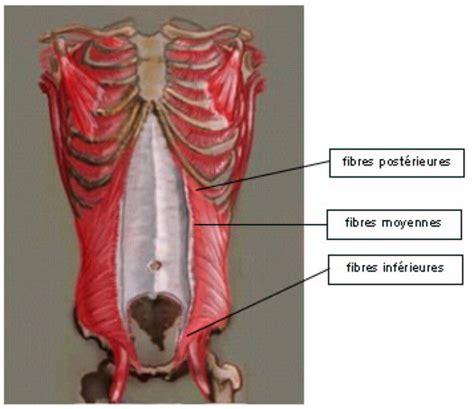 addominali obliqui interni fig 3 vue ant 233 rieure du oblique interne