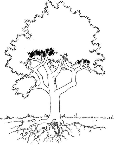 tree stem coloring page how to draw tree and root