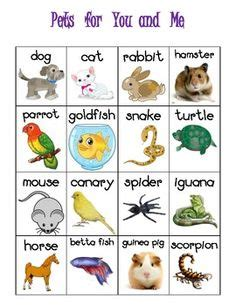 theme names for pets pets vets theme week daycare spaces and ideas