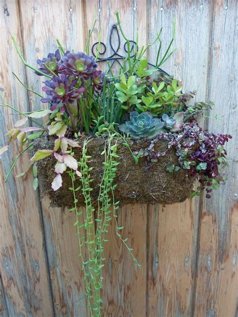 hanging succulent planter garden pinterest