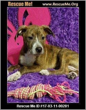 delaware puppy rescue adoptions german shepherd rescue delaware autos post
