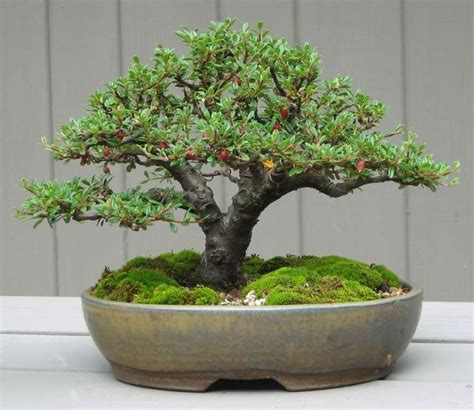 Bonsai Tree Planters by Selecting The Right Bonsai Pots Is Important