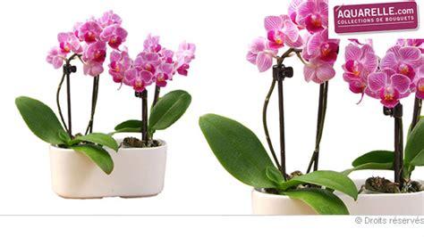 bouquet en pot part 4