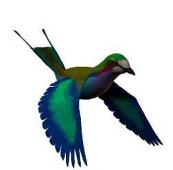 gifs animados metodos anticonceptivos narturales la ornitolog 237 a de cristo rey ciencias naturales en