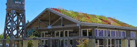 living roof resturant 244 best images about green roofs on green
