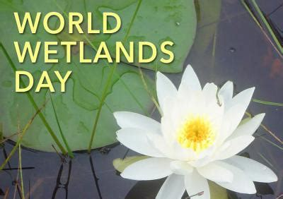 Celebrate World Wetlands Day 2 Feb With Free Wetlands Tours by 2nd February Review In