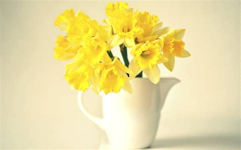 vase narcissus yellow flowers wallpaper 1680x1050 23687