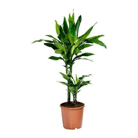 potting indoor plants palms and plants ikea