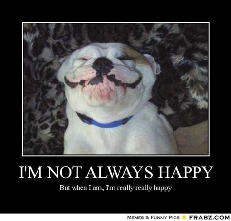 Happy Dog Meme - happy friday dog memes