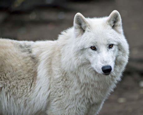 zoologischer garten berlin telefonnummer zoo berlin visitberlin de