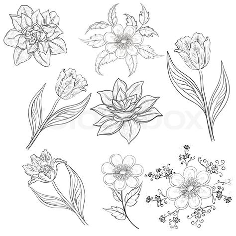 flowers set outline stock photo colourbox