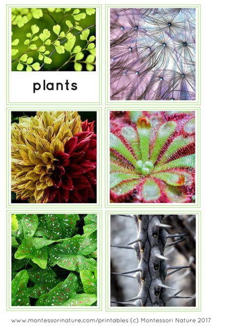 patterns in nature biology syllabus patterns in nature montessori nature