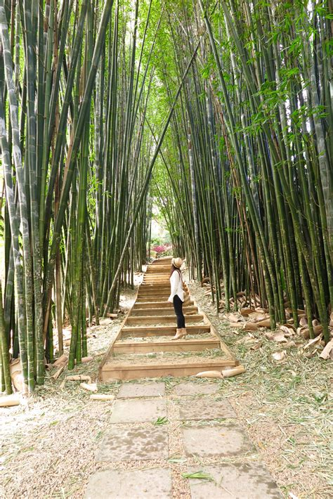 Bamboo Garden Hours by Rawspirations Bungalow Farmers Markets And Castle