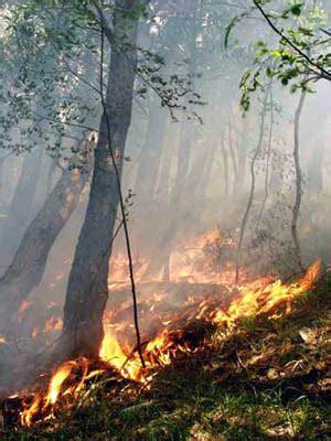 ufficio catasto prato aggiornato il catasto incendi boschivi a montemurlo