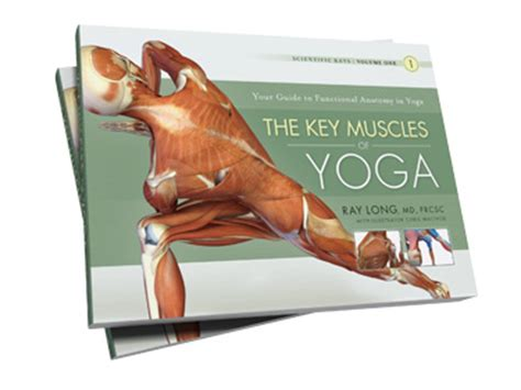 key muscles of yoga 1607432382 how to achieve lift off with uddiyana bandha 187 blissful yogini yoga teacher resources and