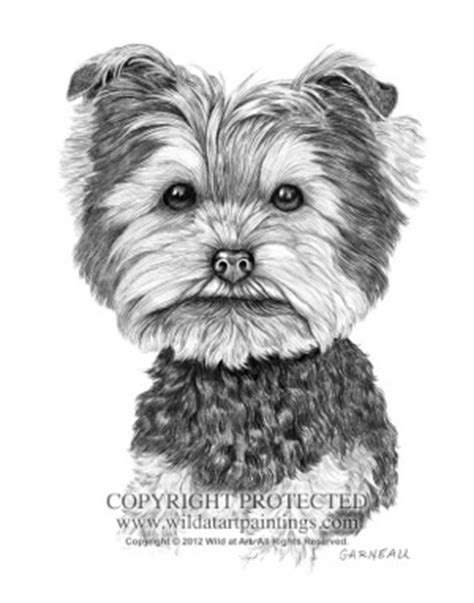 drawings of yorkies 17 best images about yorkie in black and white on friend photos