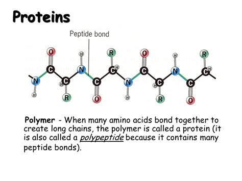 a protein is a polymer of polymers presentation chemistry sliderbase