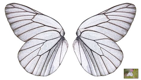 Fly And Be Free With Silver Service Wings Necklace From Direct by Unrestricted White Butterfly Wings By Frozenstocks On